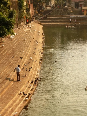 Man feeding the birds at Banganga tank mumbai