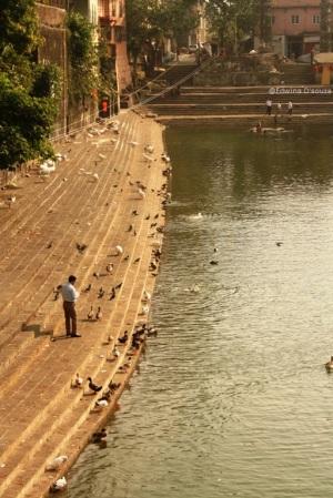 Man feeding the birds at Banganga