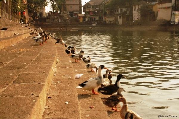 Ducks at Banganga