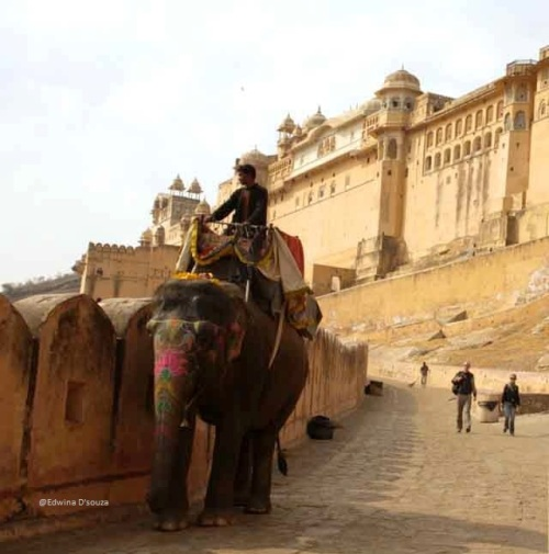 Optional elephant rides upto Amber Fort - rajasthan itinerary