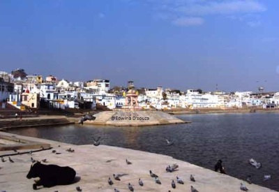 Pushkar Lake and Adjoining Ghats - pushkar priests