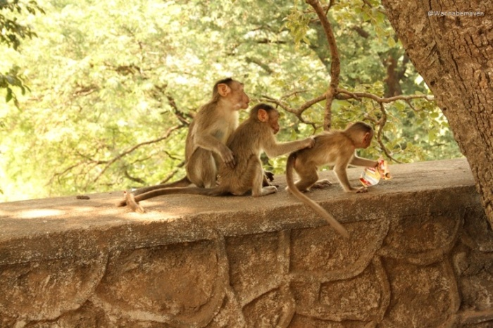 Monkeys near Kanehri caves