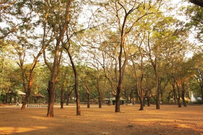 Inside Borivali National Park