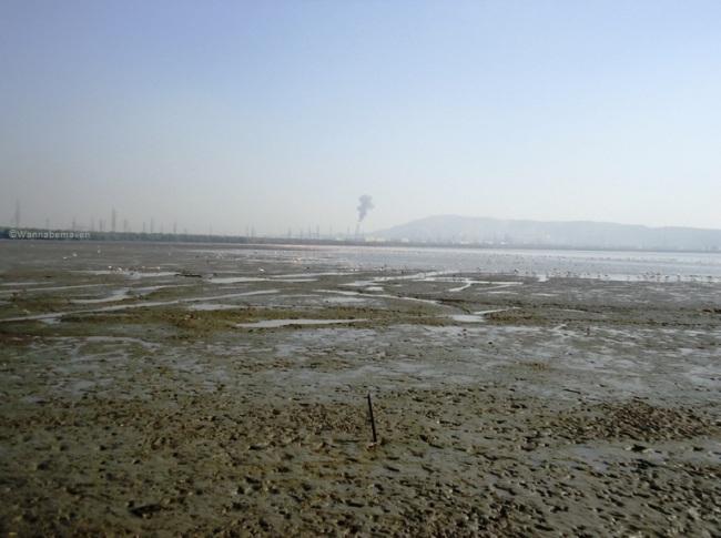Sewri Mudflats - sewri jetty flamingos