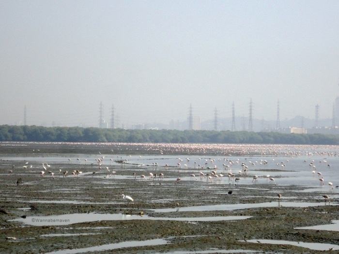 Flamingo's at Sewri Jetty