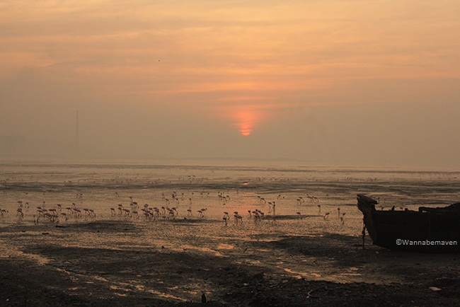 Sewri jetty - Sunrise