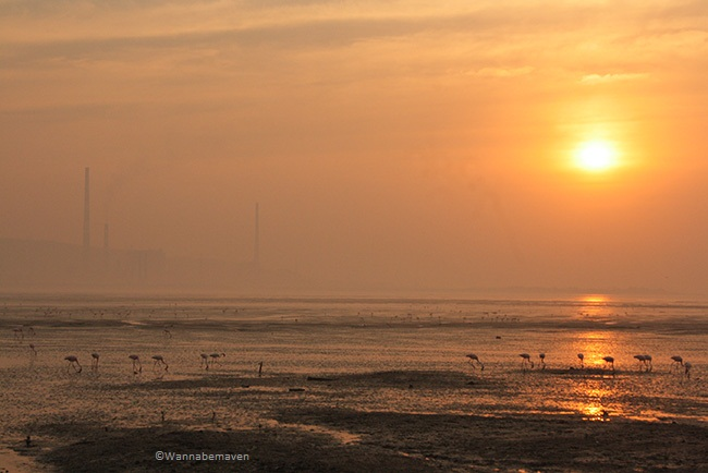 Sewri jetty - Sunrise view