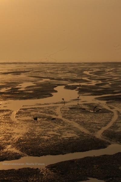 Sewri jetty Mudflats - sewri jetty flamingos