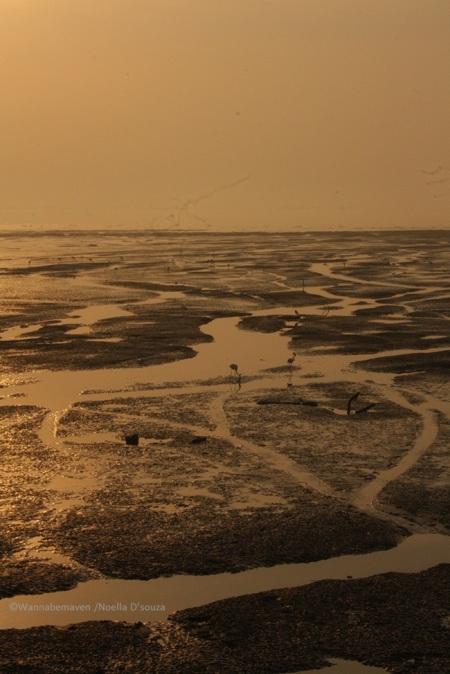 Sewri jetty Mudflats