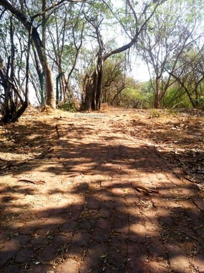 Trails inside Maharashtra Nature Park