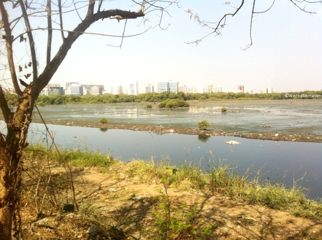 Mithi River near Maharashtra Nature Park