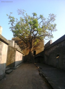 lone tree stood inside Sewri fort - Forts in Mumbai